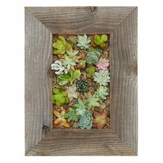 Succulent Living Wall Planter Kit | Vertical Container Gardening | UncommonGoods