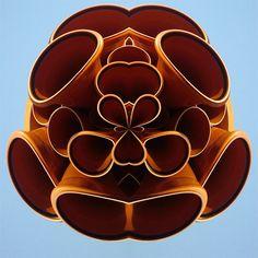 #038-Rohrblume