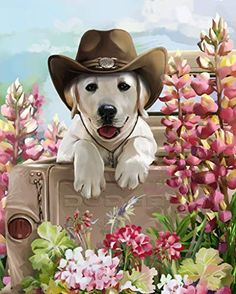 DIY Oil Painting Paint by Number Kit for Kids Adults Beginner inch - Dog Wearing A Hat, Drawing with Brushes Christmas Decor Decorations Gifts (Without Frame) Cat Dog, Paint By Number Kits, Labrador Retriever Dog, Dog Paintings, Belle Photo, Dogs And Puppies, Art Projects, Cute Animals, Funny Animals