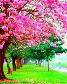 Science Discover My yard will be all flowering trees Beautiful Nature Wallpaper Beautiful Landscapes Beautiful Images Beautiful Gardens Beautiful Flowers Natur Wallpaper Landscape Photography Nature Photography Colorful Trees