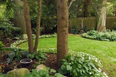Curved Landscaping in shade.  Hostas, white impatiens.  Dark mulch. Manicured edge of landscape/lawn.