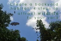 Create a backyard habitat: 4 steps to attract wildlife (and get kids into nature and the environment)