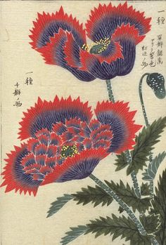 "lunar-danse: "" These images come from ten albums of flora containing more than 700 images from the Museum at the University of Tokyo: honzo database (english home page). [via armchair aquarium annex]. Botanical Drawings, Botanical Illustration, Botanical Prints, Illustration Art, Japanese Painting, Chinese Painting, Chinese Art, Art Japonais, Japan Art"