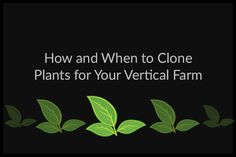 How and When to Clone Plants for Your Vertical Farm