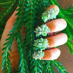 Ekologiczny manicure: sukulenty rosnące na paznokciach