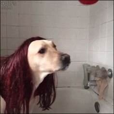 #Dogs #Dog #MaryJane #Cosplay #SpiderMan #Toys #Kissing #AnimatedGIF #gifs #gif
