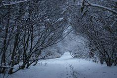 Let It Snow <3
