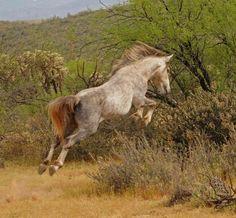 Salt River wild Horses- Advocates