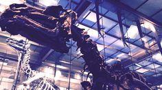 Wij zijn trouwe klanten van het Museum van Natuurwetenschappen in Brussel. Jaarlijks brengen wij een bezoek aan dit super-fijn-voor-kinderen-museum. En telkens weer komen we enthousiast, moe en tevreden naar huis. Ook deze keer! In principe gingen we voor de tijdelijke tentoonstelling WoW (Wonders of Wildlife), maar het was uiteindelijk de expo 'De Galerij van de … Lees verder Waarom wij jaarlijks naar het Museum voor Natuurwetenschappen terugkeren →