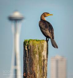 SOMEWHERE IN SEATTLE by LouNicksic #animals #animal #pet #pets #animales #animallovers #photooftheday #amazing #picoftheday