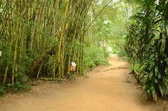 Passeios ecológicos e radicais. Dicas de ecoturismo em Paraty