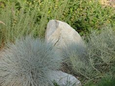 """""""Not only do rocks in the landscape provide a beneficial micro-climate for good garden bugs and your plants, from a design perspective they offer transition between the architecture of your home and garden."""" From Rob Moore at the Native Plants and Wildlife Gardens blog."""