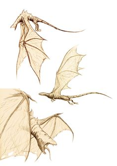 Dragons Sketches