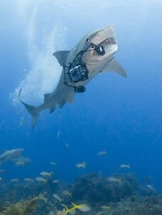 shark vs. animal photographer - shark wins