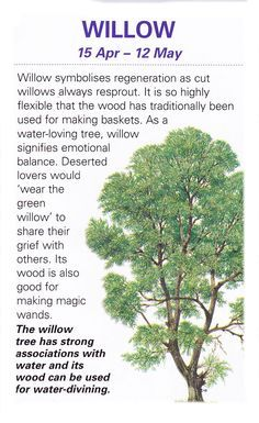 Sacred celtic trees Willow- must have one at my future house Land Art, Celtic Tree, Celtic Dragon, All Nature, Trees And Shrubs, Book Of Shadows, Tree Of Life, Mother Earth, Witchcraft