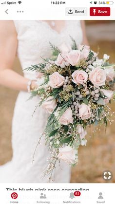 This blush pink rose cascading bridal bouquet with evergreens, genestra, stock and silver brunia berries is the perfect selection for a winter wedding! Pink Winter Weddings, Winter Bridal Bouquets, Cascading Bridal Bouquets, Cascading Wedding Bouquets, Bridal Bouquet Pink, Pink Rose Bouquet, Winter Wedding Flowers, Rose Wedding Bouquet, Floral Wedding