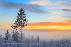 sky light - Pinned by Mak Khalaf snow in tree during sunset with mist Landscapes mistbrightfieldfogforestgeerthillicelightmountainnatureplantsnowsundownsunsetswedentreeweggen by geertweggen