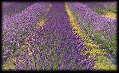 lavendel Knitting Blogs, Knits, Life, Lavender, Knit Stitches, Tuto Tricot, Knitting Stitches, Knitwear, Knitting