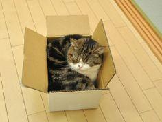 so cute in the box