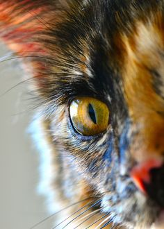 """""""I am what I am... I am a cat, and no cat anywhere ever gave anyone a straight answer."""""""