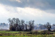 Ridgefield National Wildlife Refuge, November 2014. Pat Snyder Photo.