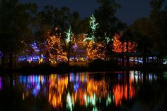 Phoenix Zoo Lights