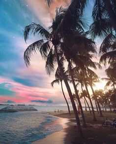 Palm trees, ocean and sand!