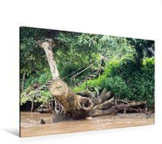 Premium Textil-Leinwand 120 x 80 cm Quer-Format entwurzelter Baum am Fluss, Thailand   Wandbild, HD-Bild auf Keilrahmen, Fertigbild auf hochwertigem Vlies, Leinwanddruck von N N Thailand, Hd Images, River, Canvas Frame, Wall Prints, Tree Structure, Printing, Canvas
