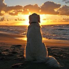 Aww....that looks like my dog enjoying her favorite place in the world....the beach!