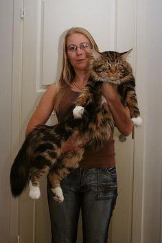 Эффективность ЛАМИНИНА на любых животных Фантастическая! Сколько кругов ветеринарного ада я прошел со своим АЛАБАЕМ. И лишь после его смерти узнал о Ламинине. Спасибо его создателям от людей и животных, за то, что теперь спасти можно многих Любимцев.! http://1541.ru Видео https://youtu.be/seLL-VjHsAI