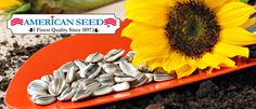 Shopping List Flowers Vegetables Herbs Seed Plantation Products