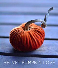 Fall Velvet Pumpkin   shop.lovefeasttable.com