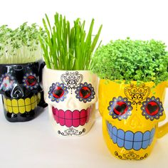 DIY Microgreens in Sugar Skull Mugs  Planter by MaggiesMicrogreens, $14.00
