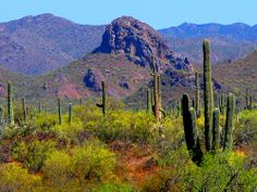 arizona desert pictures and scenery | desert colors desert landscape north of tucson arizona all rights ...