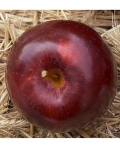 Empire Apples - A sweet-but-tart all-purpose variety, the Empire's good for cider, pies, and applesauce.