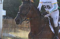 Ruiter: Sam Griffiths, Paard: Beaurepaire Nemo (Australië)