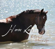 Zen guide to horses offers equine based insights into what horses think and do, and why.