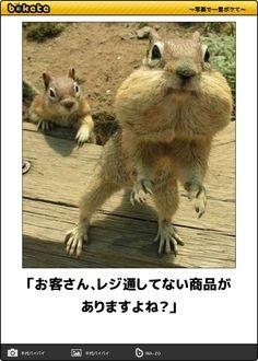 「お客さん、レジ通してない商品がありますよね?」 Animals And Pets, Funny Animals, Cute Animals, Funny Clips, Can't Stop Laughing, Illustrations And Posters, Dumb And Dumber, Cuddling, Funny Pictures