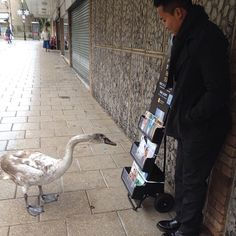 "This goose saw something he liked in Thetford, England. ""I've been a little down so I'll take a gander at what you have here. Wow, this stuff is great, it's giving me goose bumps."" Photo shared by..."