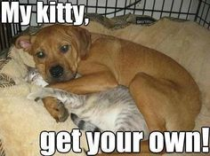 Funny dog memes for dog lovers . Dog and kitten.