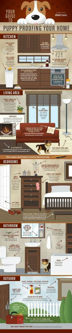 Dog Training Tips A list of everything you need to cover and move to make your home puppy-proof - Getting a puppy? This helpful infographic will show you how to puppy-proof your home. Puppy Training Tips, Training Your Dog, Potty Training, House Training A Puppy, Husky Training, Agility Training, Safety Training, Puppy Care, Dog Care