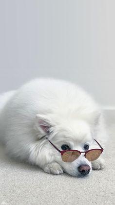 Cute Little Puppies, Cute Dogs And Puppies, Super Cute Animals, Cute Little Animals, Cute Dog Wallpaper, Plain Wallpaper, Beautiful Wallpaper, Galaxy Wallpaper, Iphone Wallpaper