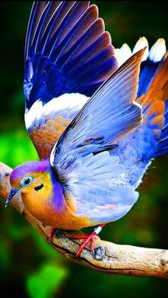 I have never seen a bird with all these colors. It's beautiful but is it real and not someone playing with the picture?.........I DO NOT KNOW EITHER --- BUT, WHATEVER --- IT IS BEAUTIFUL..............ccp
