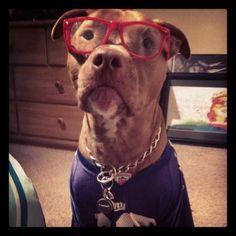 NY Giants Dog!
