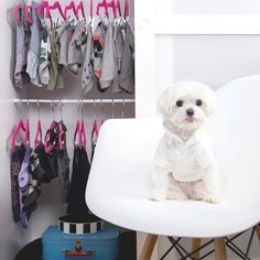 I've got a closet full of clothes nothing to wear Follow @maltese_dog_love for more via @mochiandthecity Love to tag? Please do! - #maltese #maltesedoglove #maltesers #maltese101 #maltesedog #maltesepuppy #malteseofficial #malteselover #malteselovers #malteseofinstagram #malteser #dog #dogs #puppy #dogsofinstagram #instadog #dogstagram #ilovemydog #dogoftheday #lovedogs #instagramdogs #doglife #doglove #dogsofinstgram