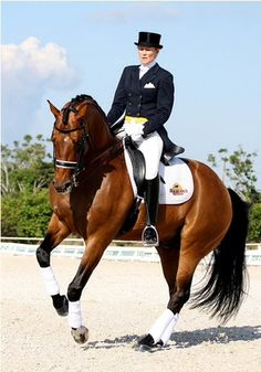 Hunter jumper eventing horse equine grand prix dressage equestrian fox hunt hunting