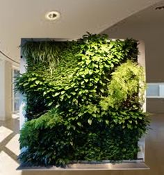 Gentil Biophilia: The State Of Grace In The Workplace. Plant WallWalled  GardenGarden ...