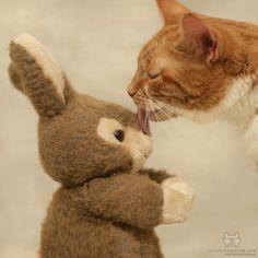 "cats_of_instagram: ""From @saff_pstm: ""Everybody loves somebunny "" #catsofinstagram"""