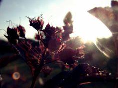 Summer sunset photography