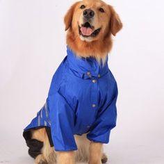 Saluki perro joyas. una buena pareja viento perros Collar con colgante